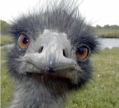 ostrich743207