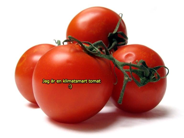tomater klimat