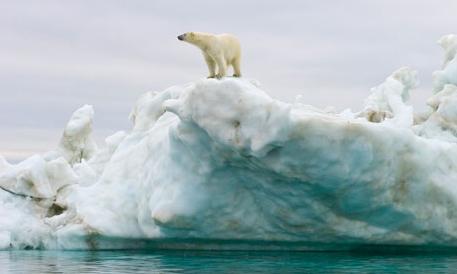 isbjörn på is3