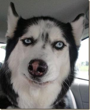 Skeptisk hund