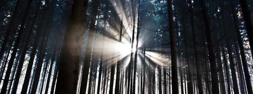 Tysk skog