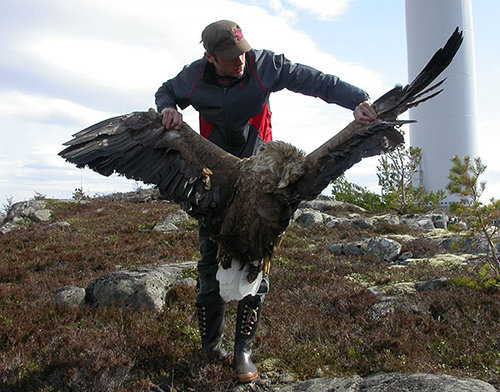 vindkraft o fåglar