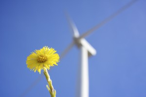 vindkraft Mp