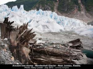 skog under glaciar
