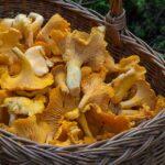 fungus 1194380 960 720