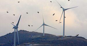 vindkraft faglar